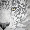 Jaguar by Mayhem Mediums