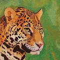 Jaguar by Peter Antos