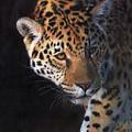 Jaguar Portrait by David Stribbling