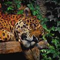 Jaguar Relaxing by Ernie Echols