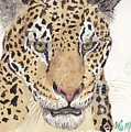 Jaguar by Wayne Monninger