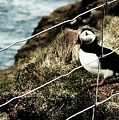 Jailbird by HweeYen Ong