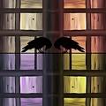 Jailbirds by Barbara St Jean