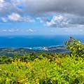 Jamaican Vista by John M Bailey