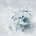 January Bluejay  by Susan Capuano