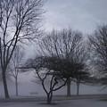 January Fog 6 by Anita Burgermeister
