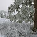 January On Kamiak Butte by Jerry McCollum
