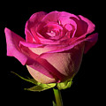 January Rose by Gary Dean Mercer Clark