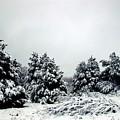 January Snow Iv by Brittini Rinehart