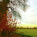January Sunrise by Anne Kotan