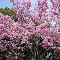 Japan Blossoms by Moshe Torgovitsky