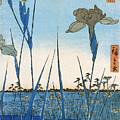 Japan: Iris Garden, 1857 by Granger