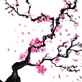 Japanese Cherry Blossoms by Jay Shaw