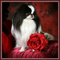 Japanese Chin And Rose by Kathleen Sepulveda
