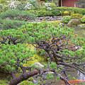 Japanese Elm by Maro Kentros