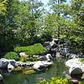 Koi Pond 3 Japanese Friendship Garden by Phyllis Spoor