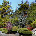 Japanese Friendship Garden San Jose California 7d12781long by Wingsdomain Art and Photography