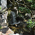 Japanese Garden And Koi Pond by Carol  Bradley