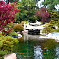 Japanese Garden Bridge And Koi Pond by Elaine Plesser