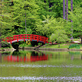 Japanese Garden Bridge  by Cynthia Guinn