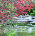 Japanese Garden Bridge In Springtime by Carol Groenen