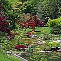 Japanese Garden II by Michiale Schneider