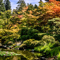 Japanese Gardens Seattle by Claudia Abbott