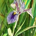 Japanese Iris by Marionette Taboniar
