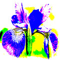 Japanese Iris Pop Art Abstract by Mother Nature