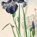 Japanese Irises by Granger