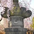 Japanese Lantern by Sonali Gangane