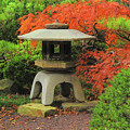 Japanese Maple And Lantern 1 by Greg Matchick