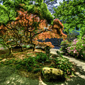 Japanese Maples In Spring by Jerry Gammon