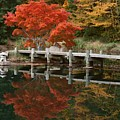 Japanese Reflection by Tina Meador