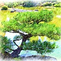 Japanese Tree by Ralph Liebstein