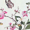 Japonica Magnolia And Butterflies by Chinese School