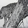 Jaquar In Tree by Stan Hamilton