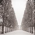 Jardin_du_luxembourg by Sophia Pagan