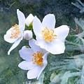 Jasmin Flower by FL collection