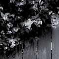 Jasmine by Sidney Spires-Mangum