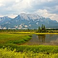 Jasper National Park by Colette Panaioti