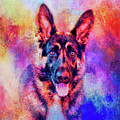 Jazzy German Shepherd Colorful Dog Art By Jai Johnson by Jai Johnson