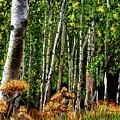 Jebediah Smith Wilderness Walk 2016 by Mia Hansen