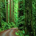 Jedediah Smith Redwoods                            by Jim Corwin