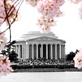 Jefferson In Spring by Tina Meador