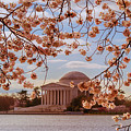 Jefferson Memorial And Cherry Blossom by Rima Biswas