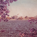 Jefferson Memorial During Spring by Emily Kay