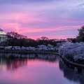 Jefferson Memorial Sunrise by Colin Gilyeat