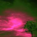 Jelks Pine 3 by Gary Bartoloni