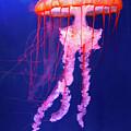 Jellyfish by David Hart
